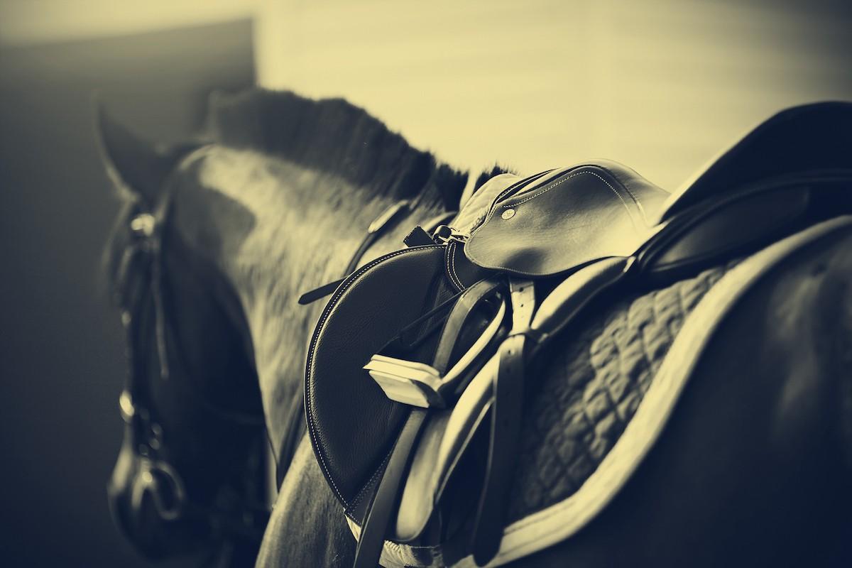 sangle pour cheval